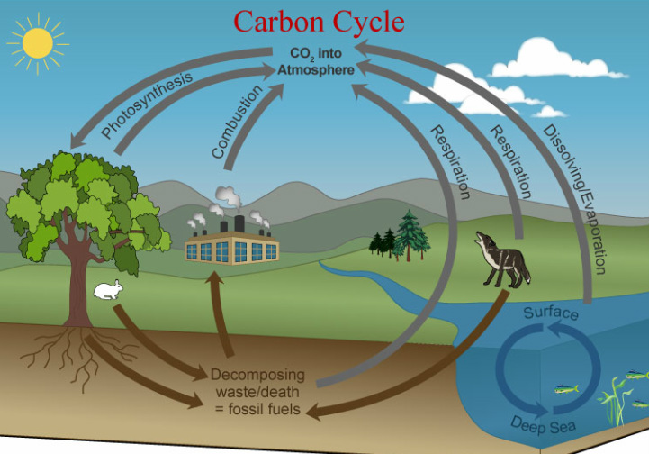 Summit learning book diagram carbon cycle morevertmorevertmorevert ccuart Gallery